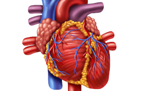 Onderzoekers printen het eerste 3D-hart gemaakt met cellen van patiënten