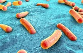 Antibiotica beïnvloedt immuniteitsreactie op vaccins door verstoring van het microbioom