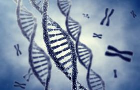 Mitochondriaal DNA afkomstig van twee ouders