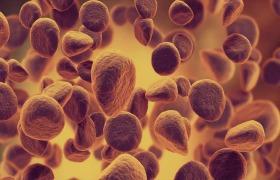 Nieuwe biomarkers voorspellen respons op immunotherapie bij kanker
