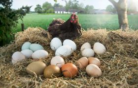 Meer eieren eten per week toch niet slecht voor de gezondheid?