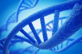 Prostaatkanker genen gevonden in muis en mens