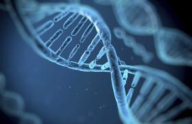 Novel genetic markers discovered for testicular cancer