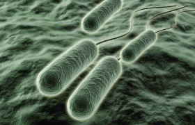 Bacteria could play a role in stress-triggered heart attacks